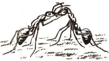 Кусая, рабочий муравей одновременно подгибает брюшко вперед, ближе к...